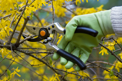 Shrub Pruning Is A Science